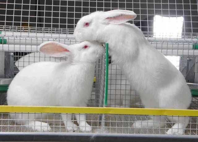 Кроличья ферма с нуля: проект и расчеты