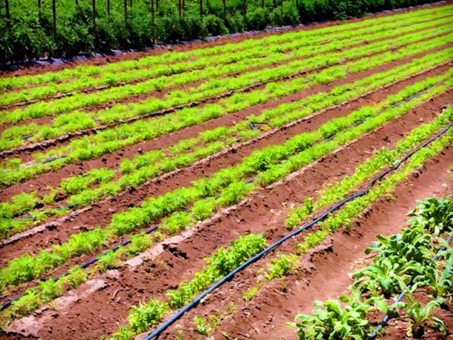 Бизнес идеи сельского хозяйства