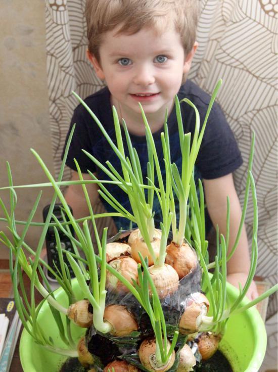 Условия выращивания лука в домашних условиях