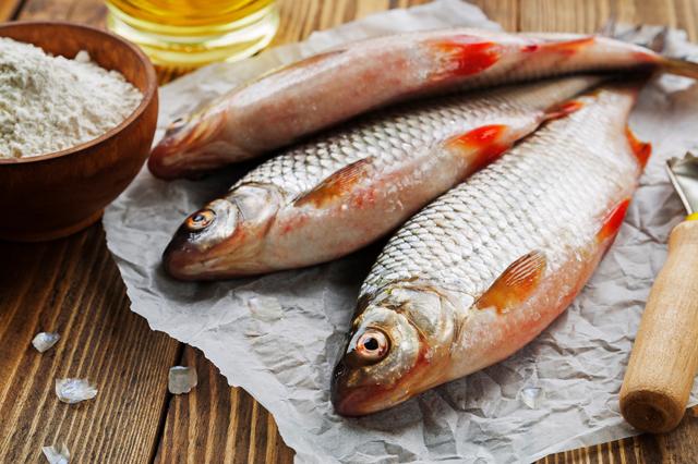 Разведение рыбы в домашних условиях как бизнес
