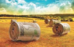 Начинающим фермерам: что нужно для получения гранта