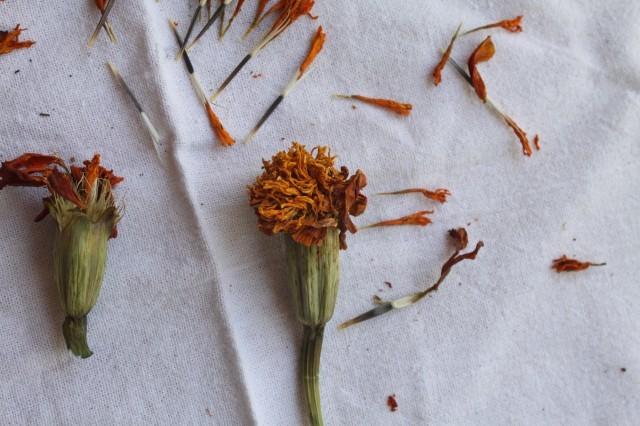 Приправа шафран: где растет, как выглядит