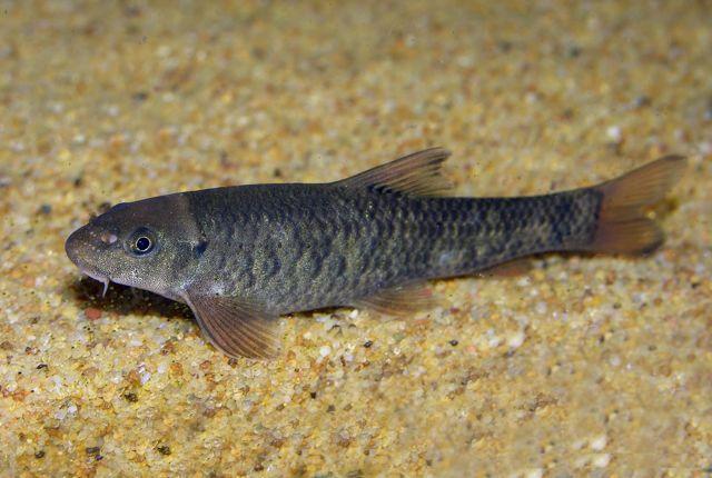 Пилинг рыбками: польза и вред