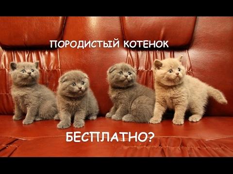 Как начать разводить кошек