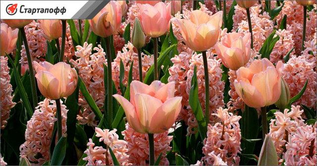 Выращивание цветов в теплицах как бизнес