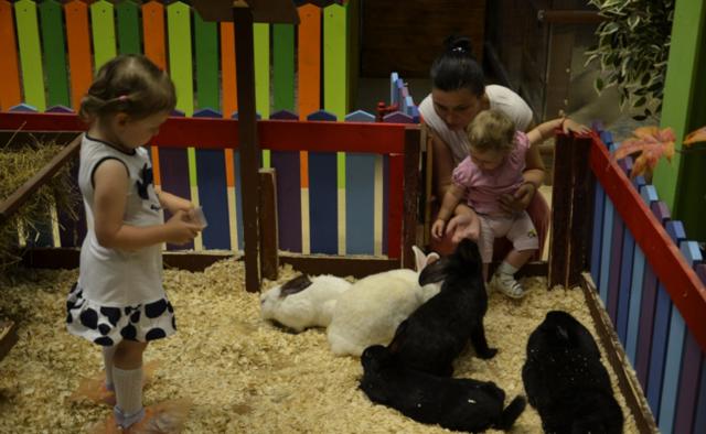 Контактный зоопарк: как открыть бизнес