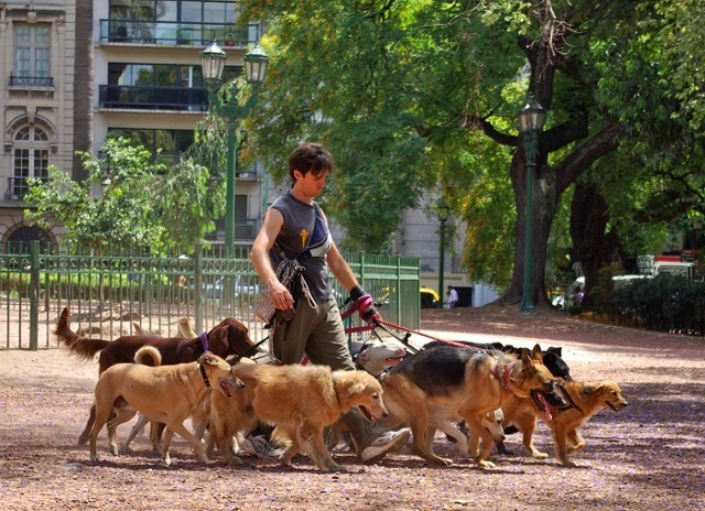 Выгул собак за деньги как заработок: где найти клиентов