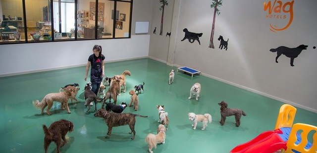Гостиница для животных как бизнес