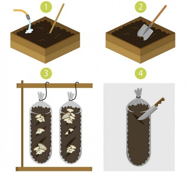 Выращивание вешенок в домашних условиях, пошаговая технология