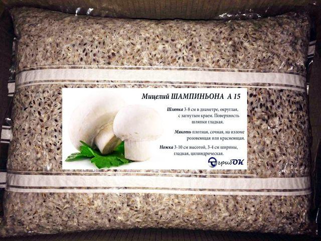 Выращивание шампиньонов как бизнес: технология, условия