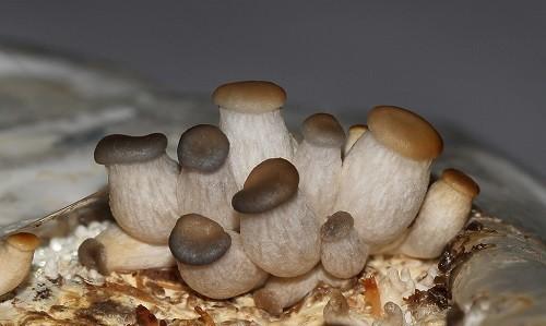 Выращивание белых грибов в домашних условиях как бизнес