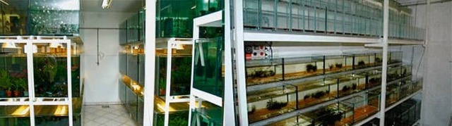 Аквариумный бизнес: разведение рыбок и растений
