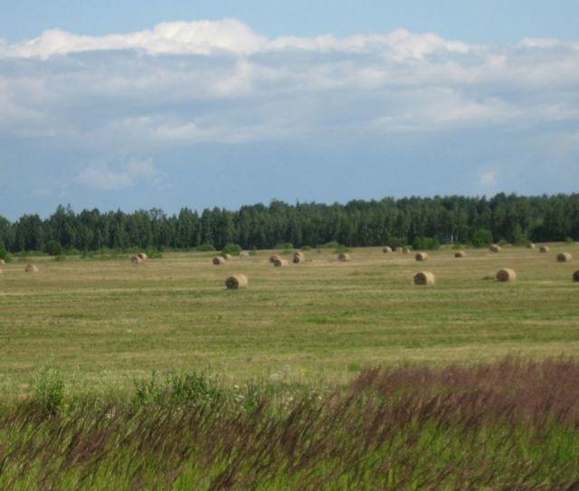С чего начать фермерское хозяйство в России: пошаговая инструкция