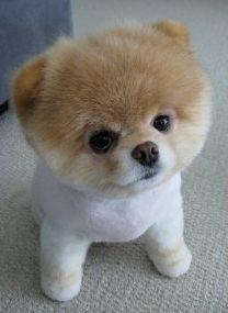 Как называется парикмахер для животных: груминг-студия как бизнес