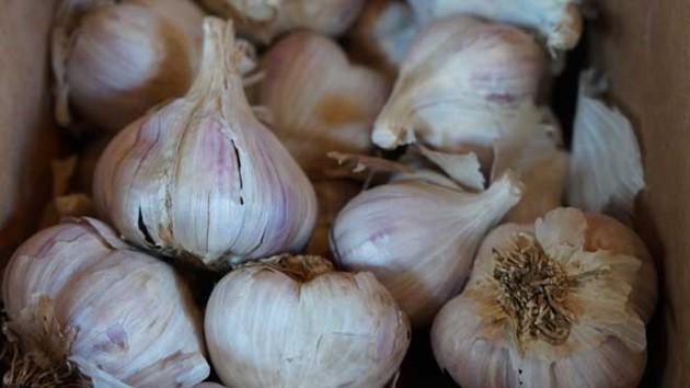 Выращивание чеснока как бизнес: рентабельность, спрос