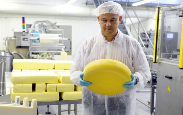Бизнес на молоке: открываем мини завод по переработке молока
